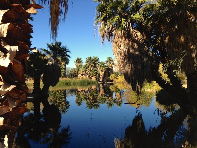 Agua Caliente Park in Tucson
