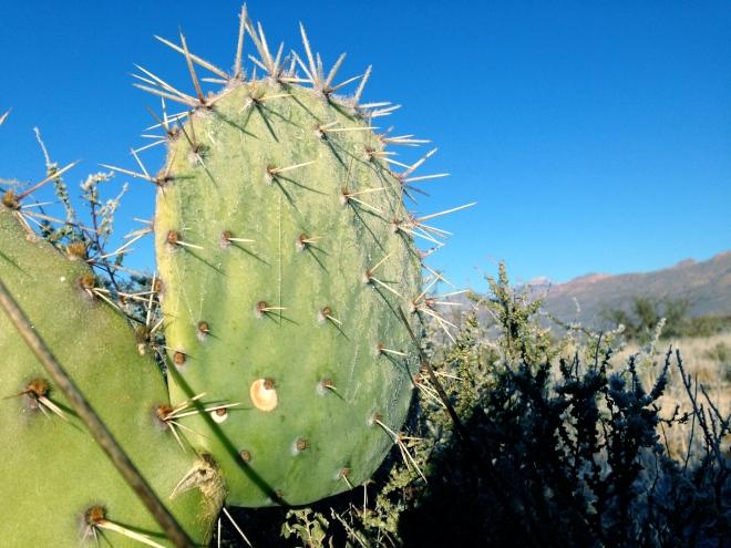 Tucson frost