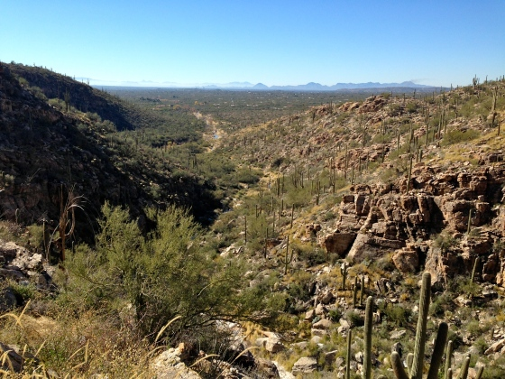 hike in Milagrosa canyon Tucson